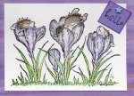 House Mouse Crocus Mice